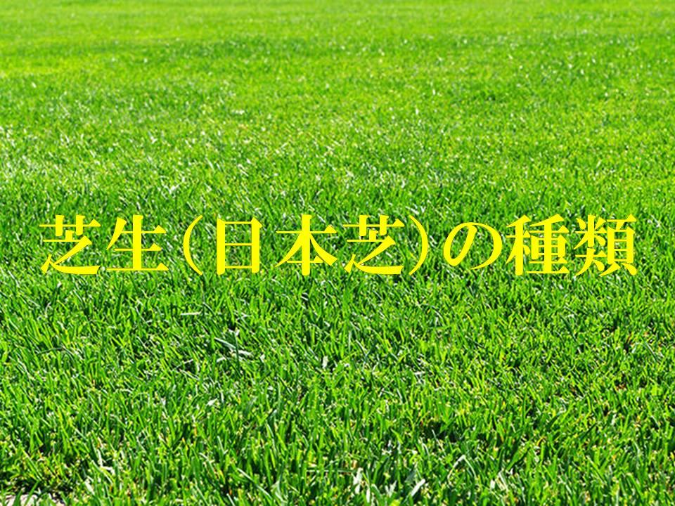 芝生(日本芝)の種類