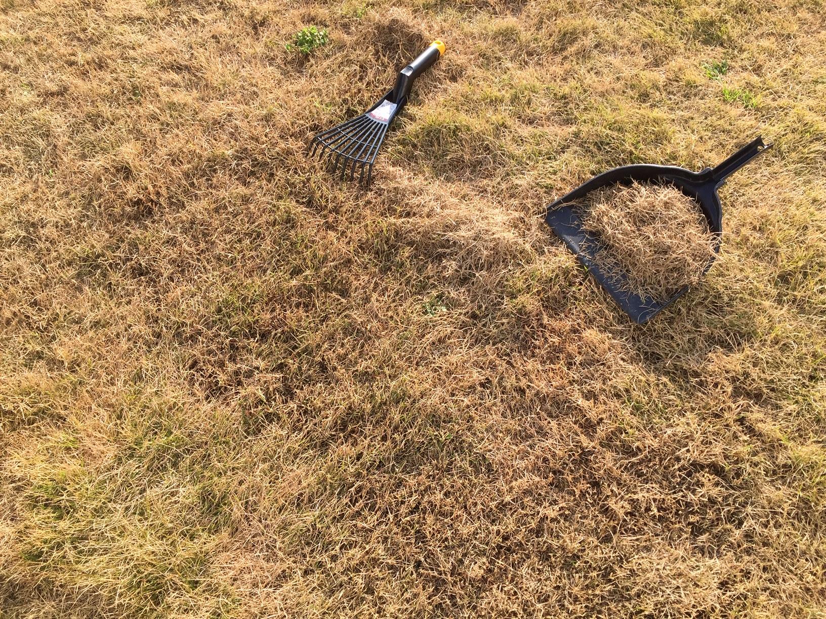2020.03.21 芝生の状況(芝掃除)