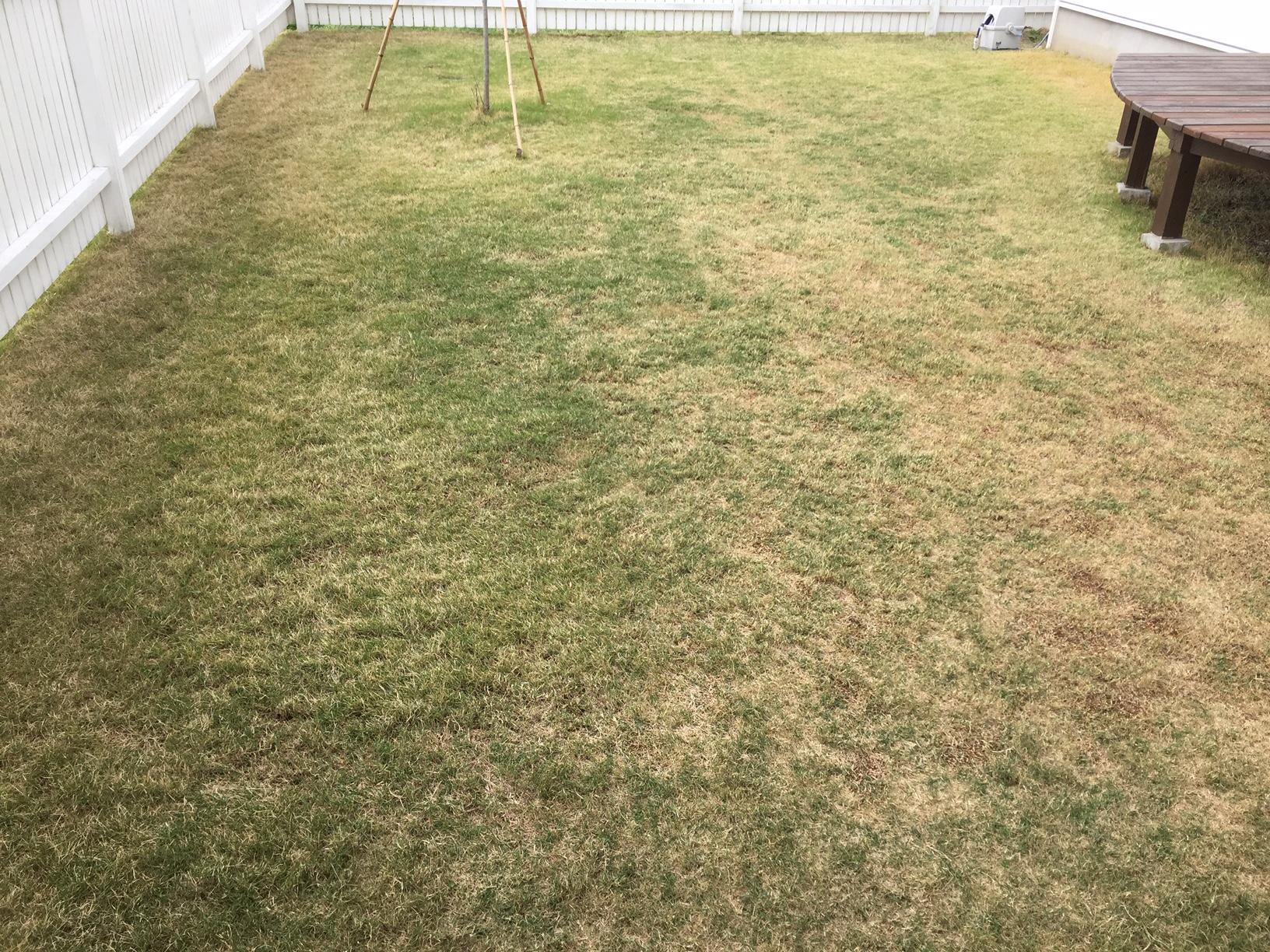 2020.05.10 芝生の状況