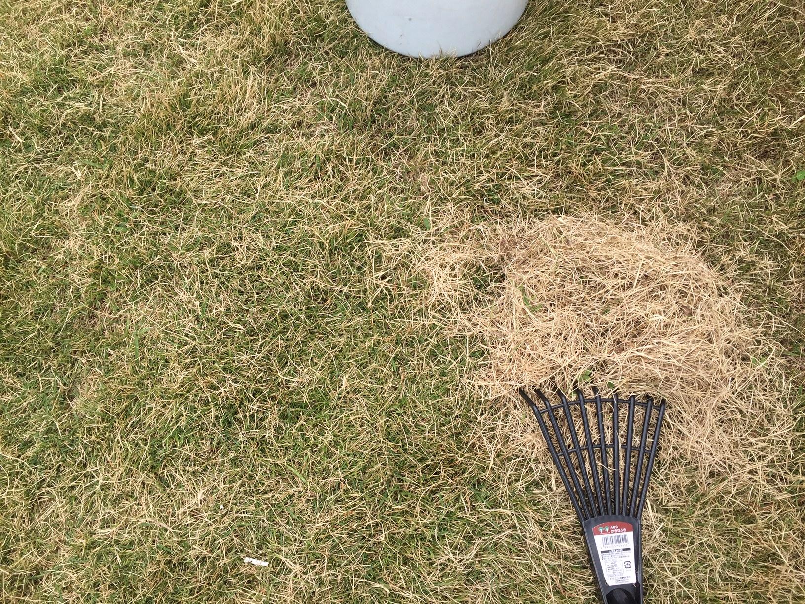 2020.05.03 芝生の状況(芝掃除&目土&肥料)