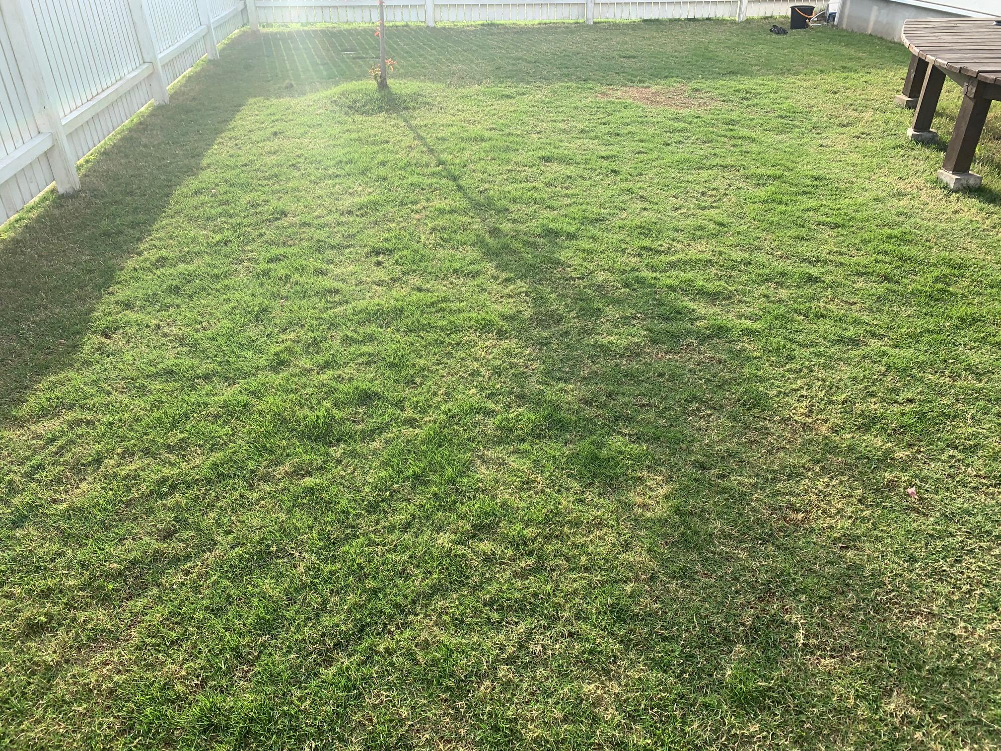 2021.05.09 芝生の状況(雑草除去)
