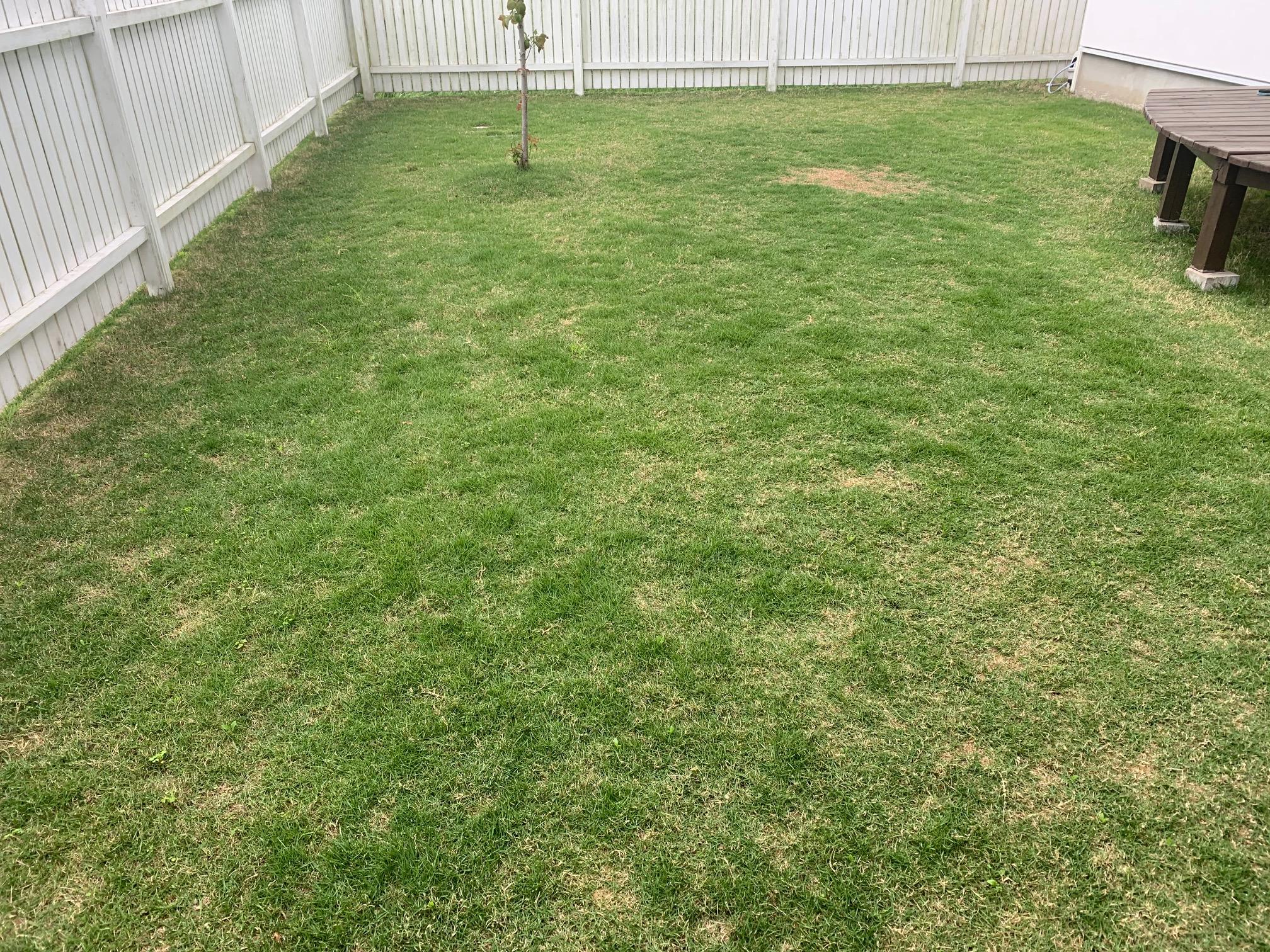 2021.05.15 芝生の状況(雑草除去)