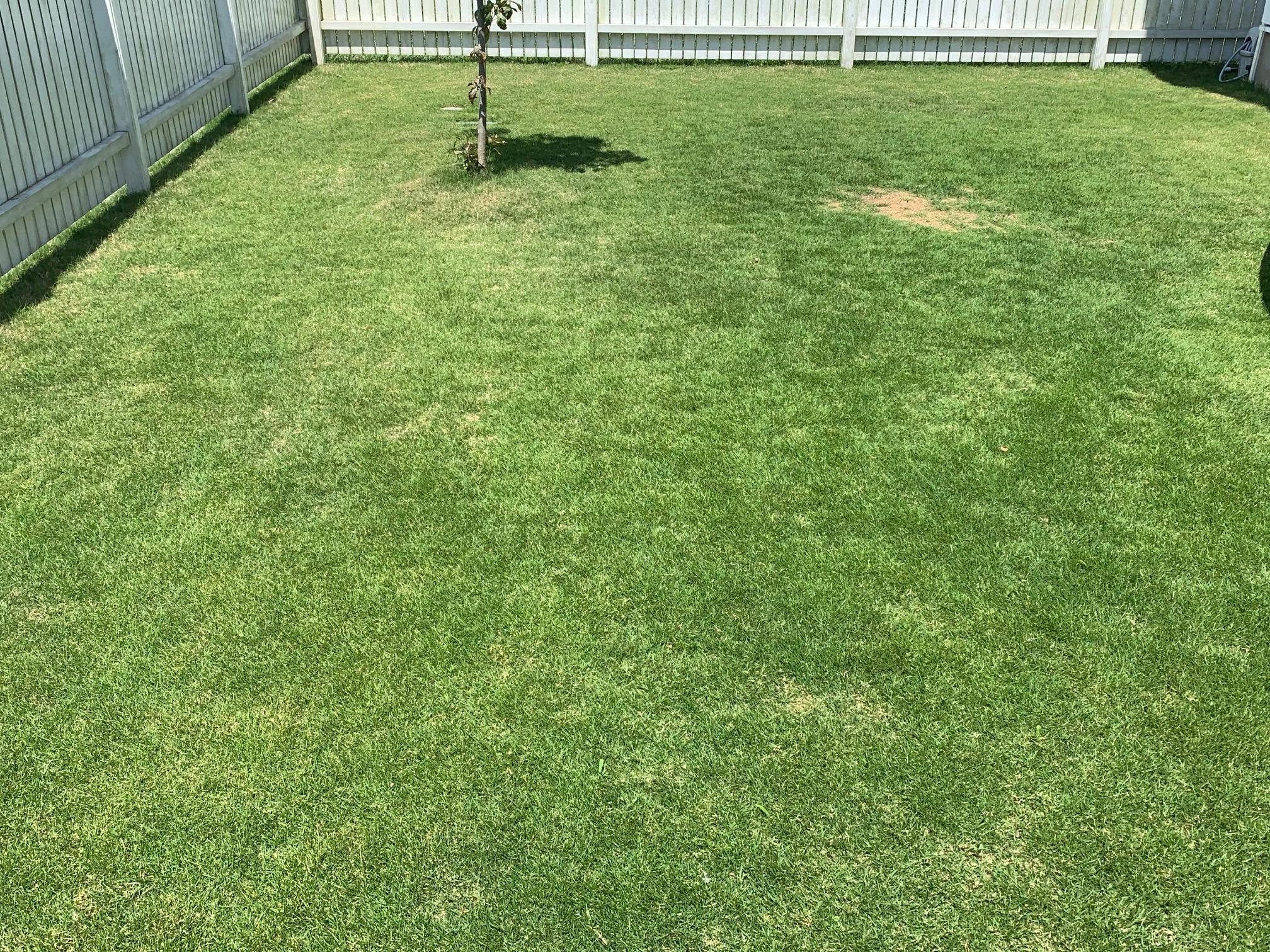 2021.06.03 芝生の状況