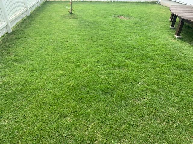 2021.06.06 芝生の状況