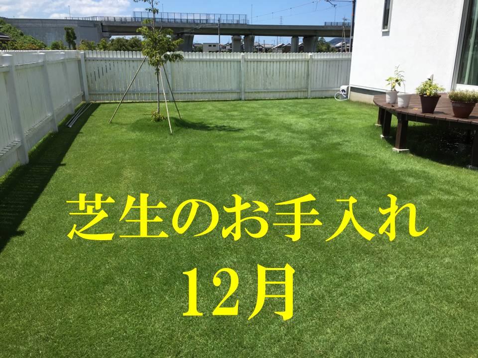 12月の芝生のお手入れ