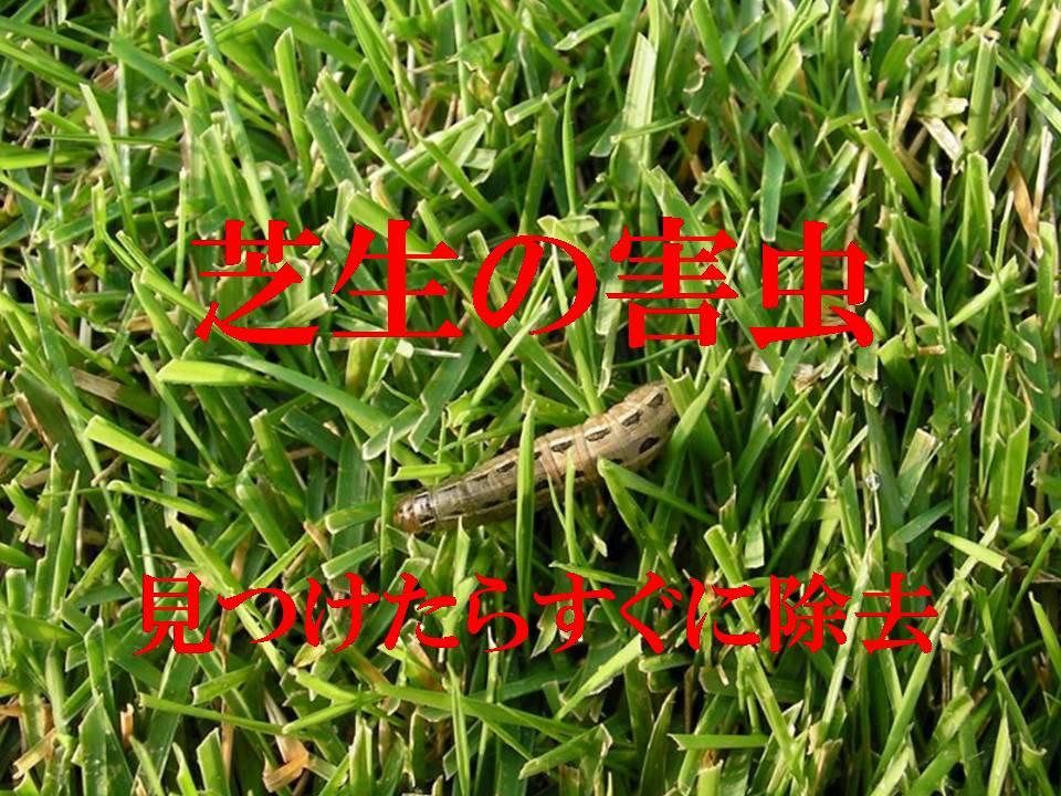 芝生の害虫