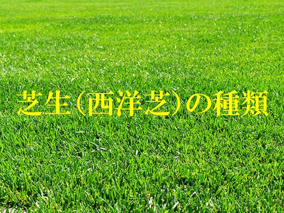 芝生(西洋芝)の種類