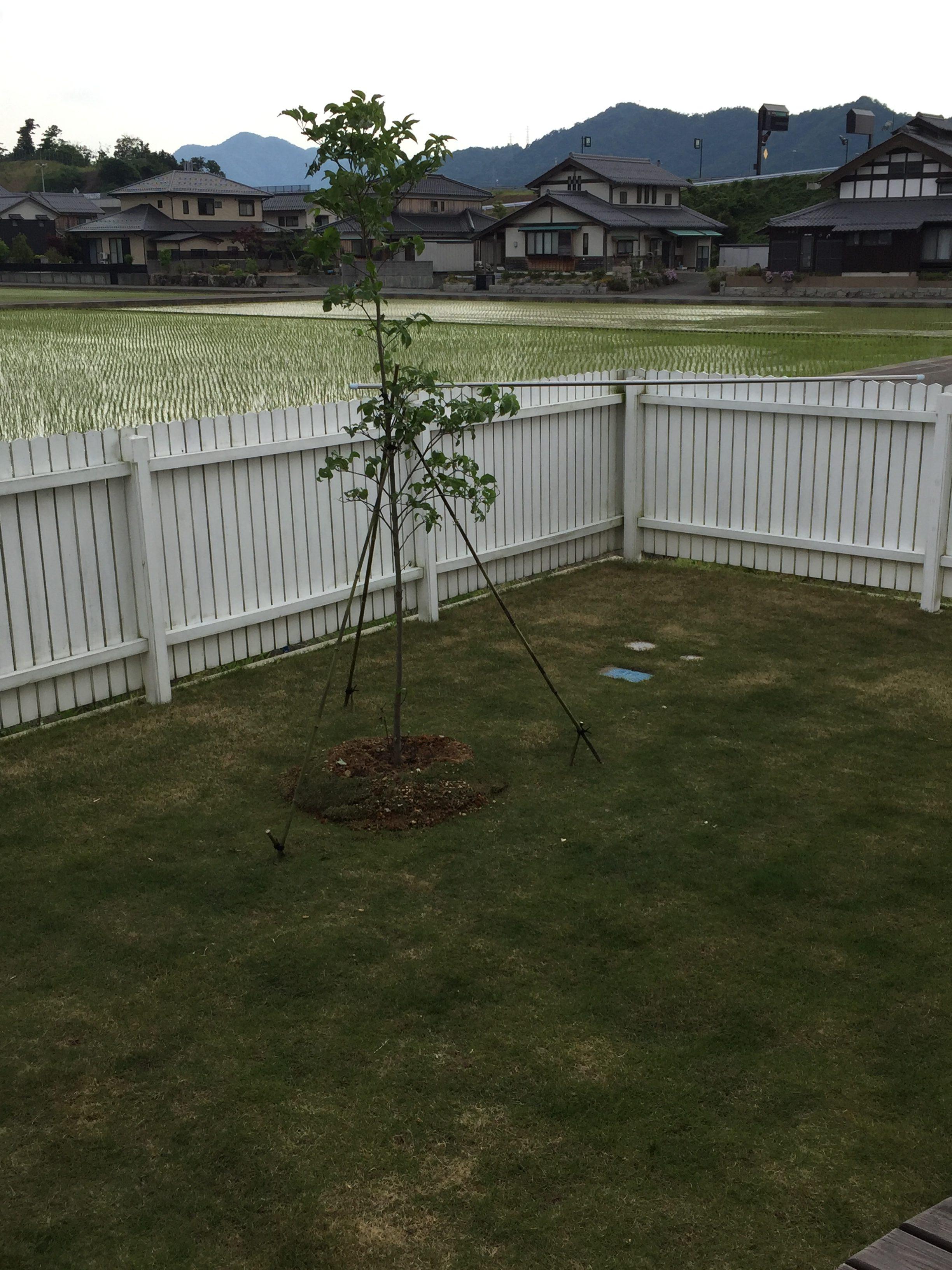 2017.05.23 芝生の状況