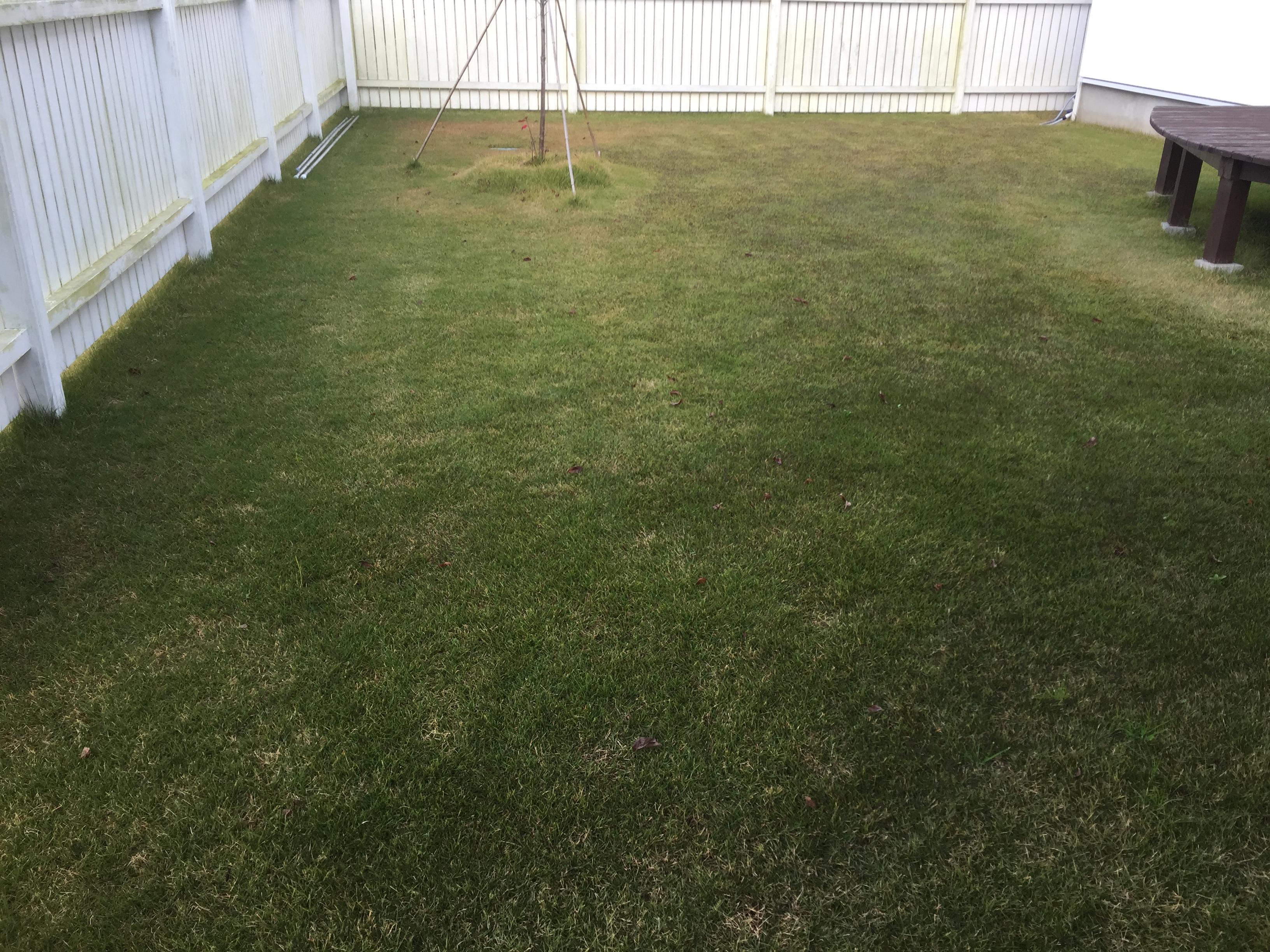 2018.11.26 芝生の状況