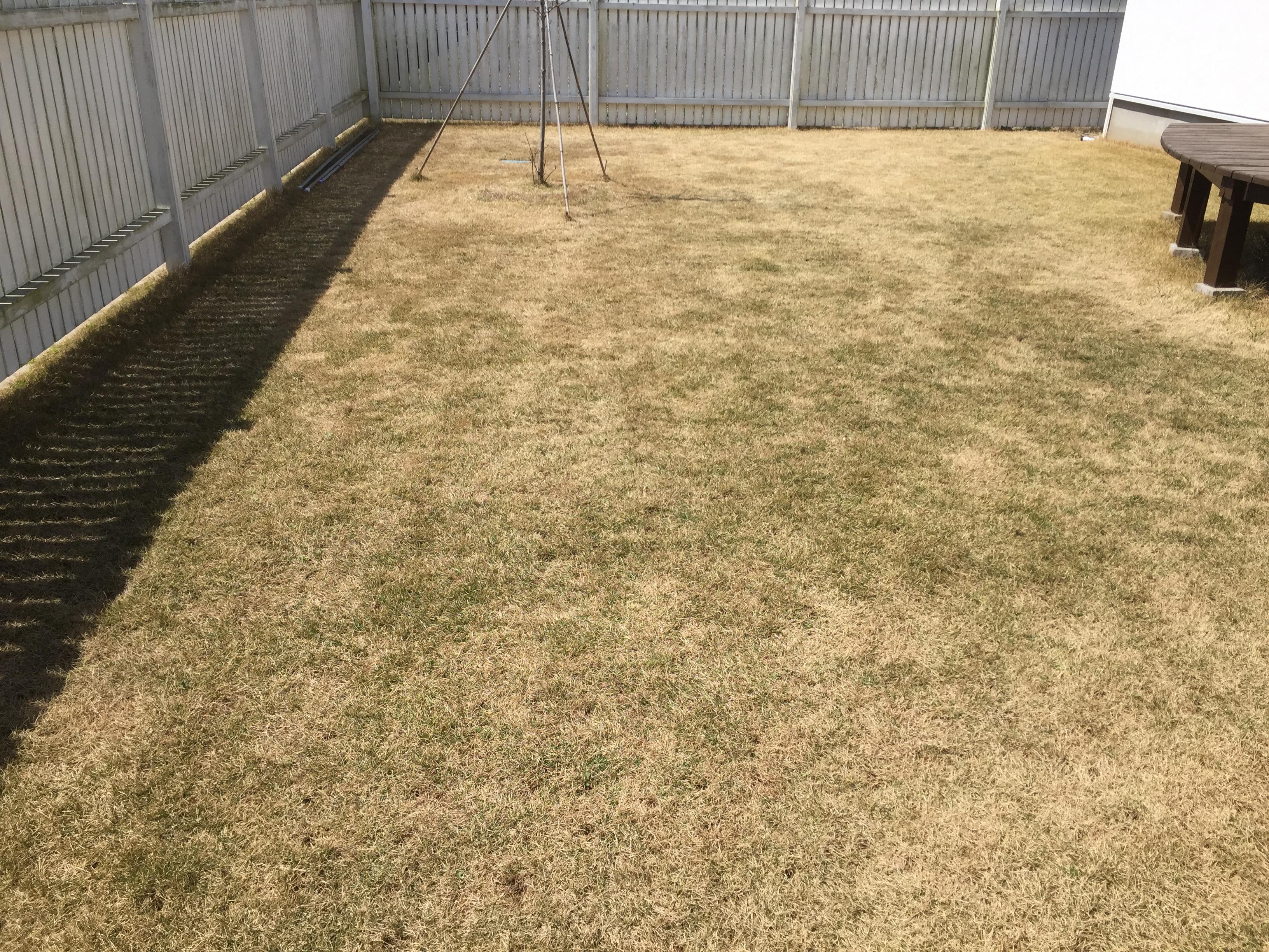 2019.04.05 芝生の状況
