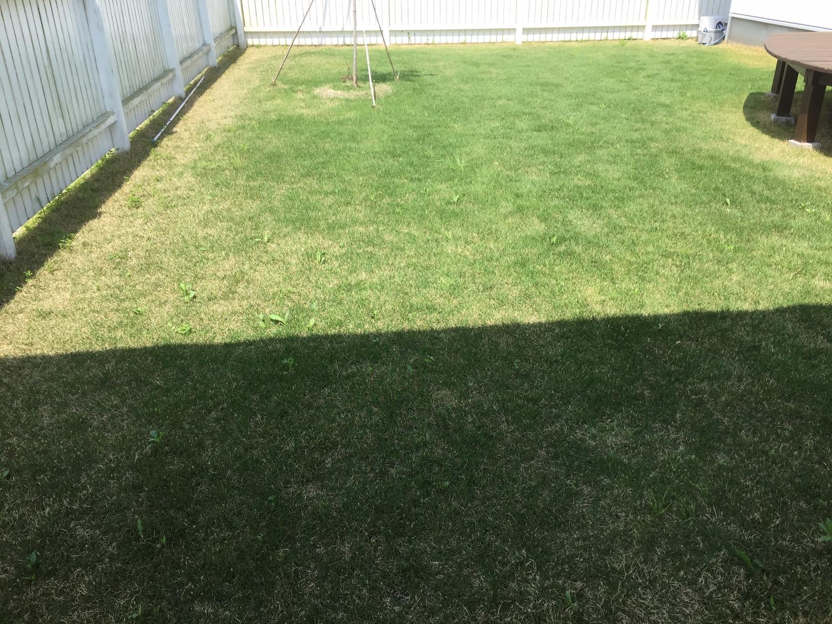 2019.05.06 芝生の状況