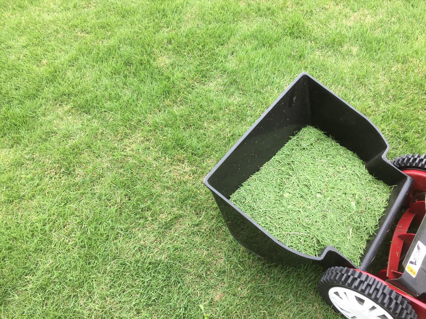 2019.05.09 芝生の状況(芝刈り・目土)