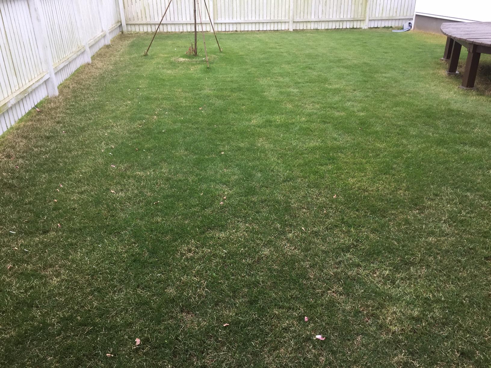 2019.05.14 芝生の状況(施肥・肥料やり)