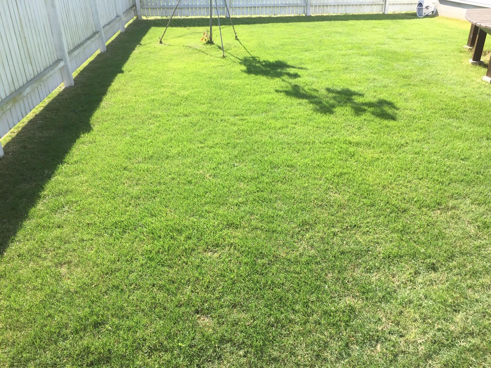 2019.05.22 芝生の状況(芝刈り・水やり)
