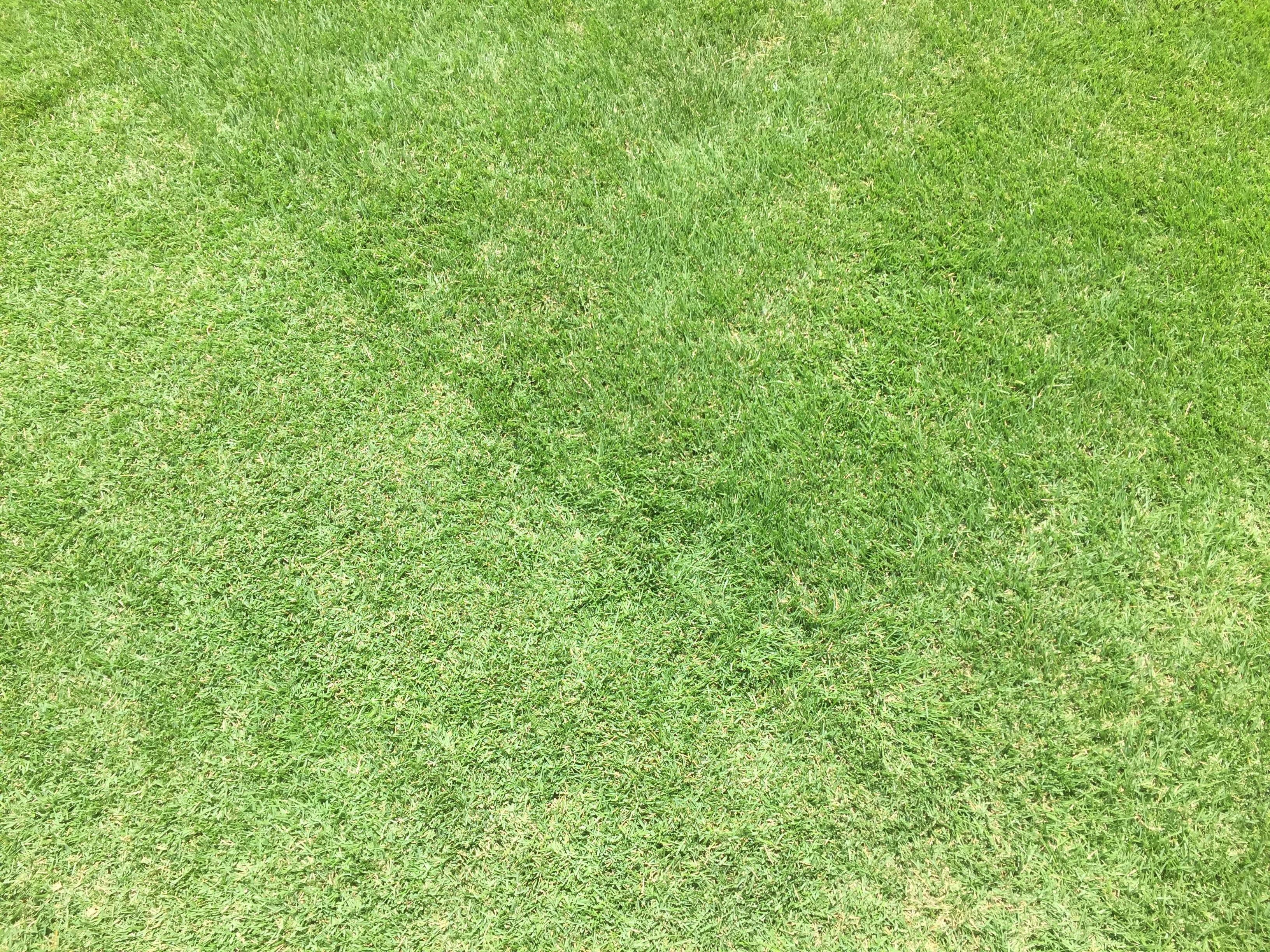 2019.06.06 芝生の状況(芝刈り)