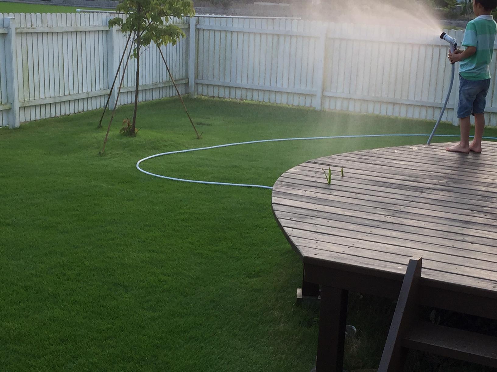2019.06.19 芝生の状況(水やり)
