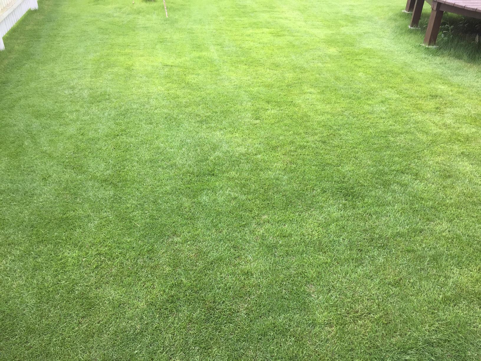 2019.07.18 芝生の状況(芝刈り)