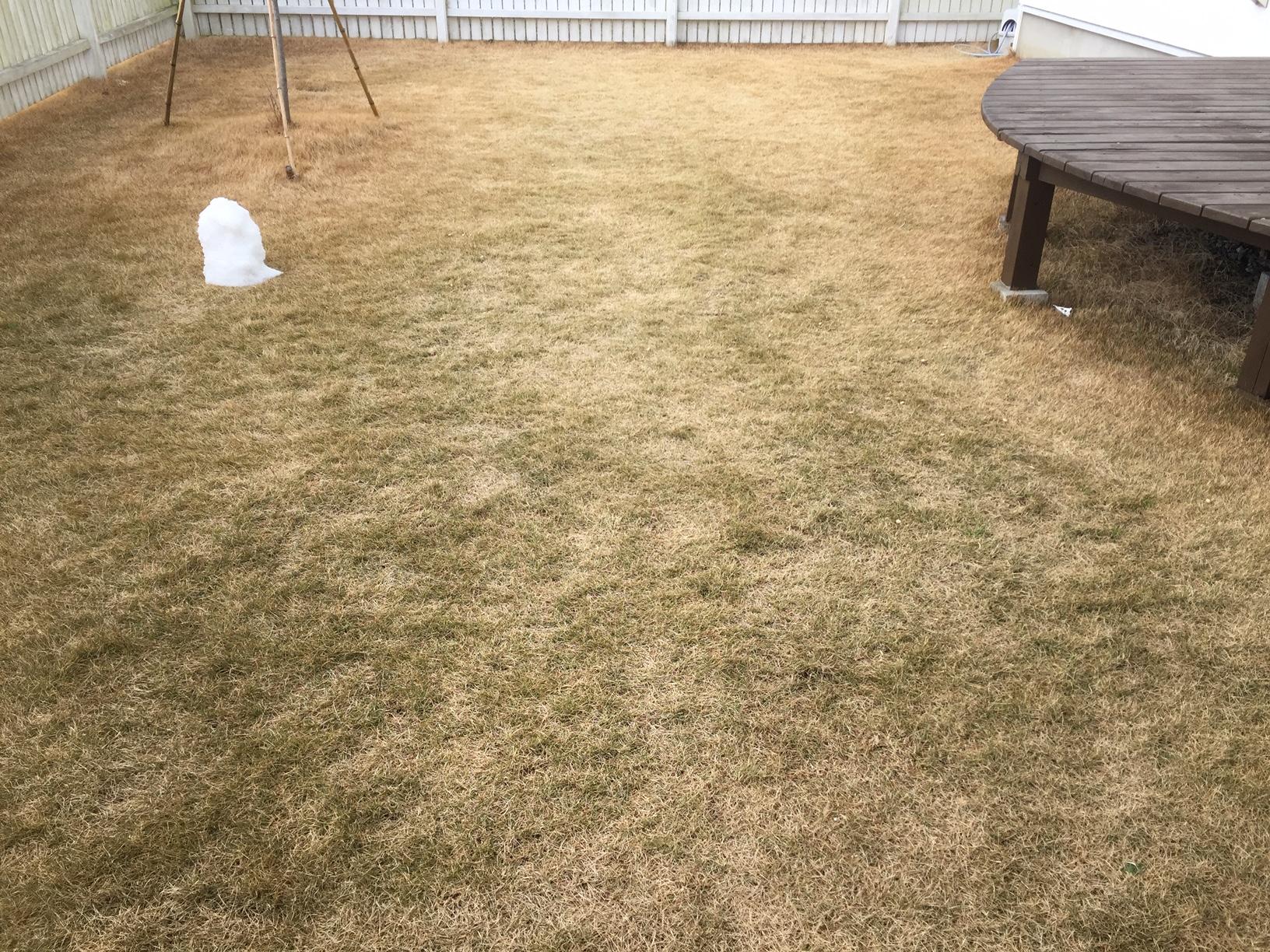 2020.02.10 芝生の状況(雪解け)
