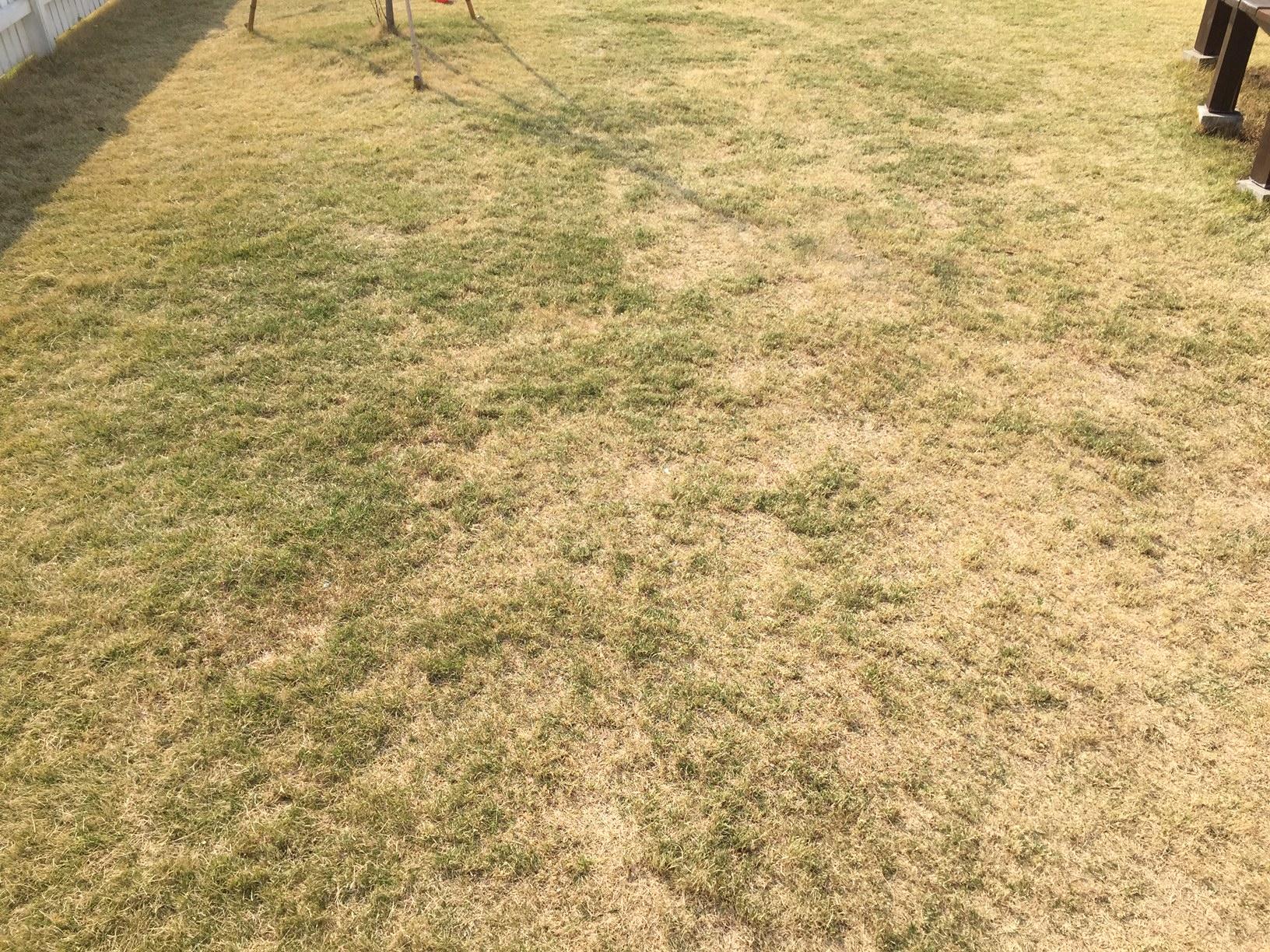 2020.05.02 芝生の状況