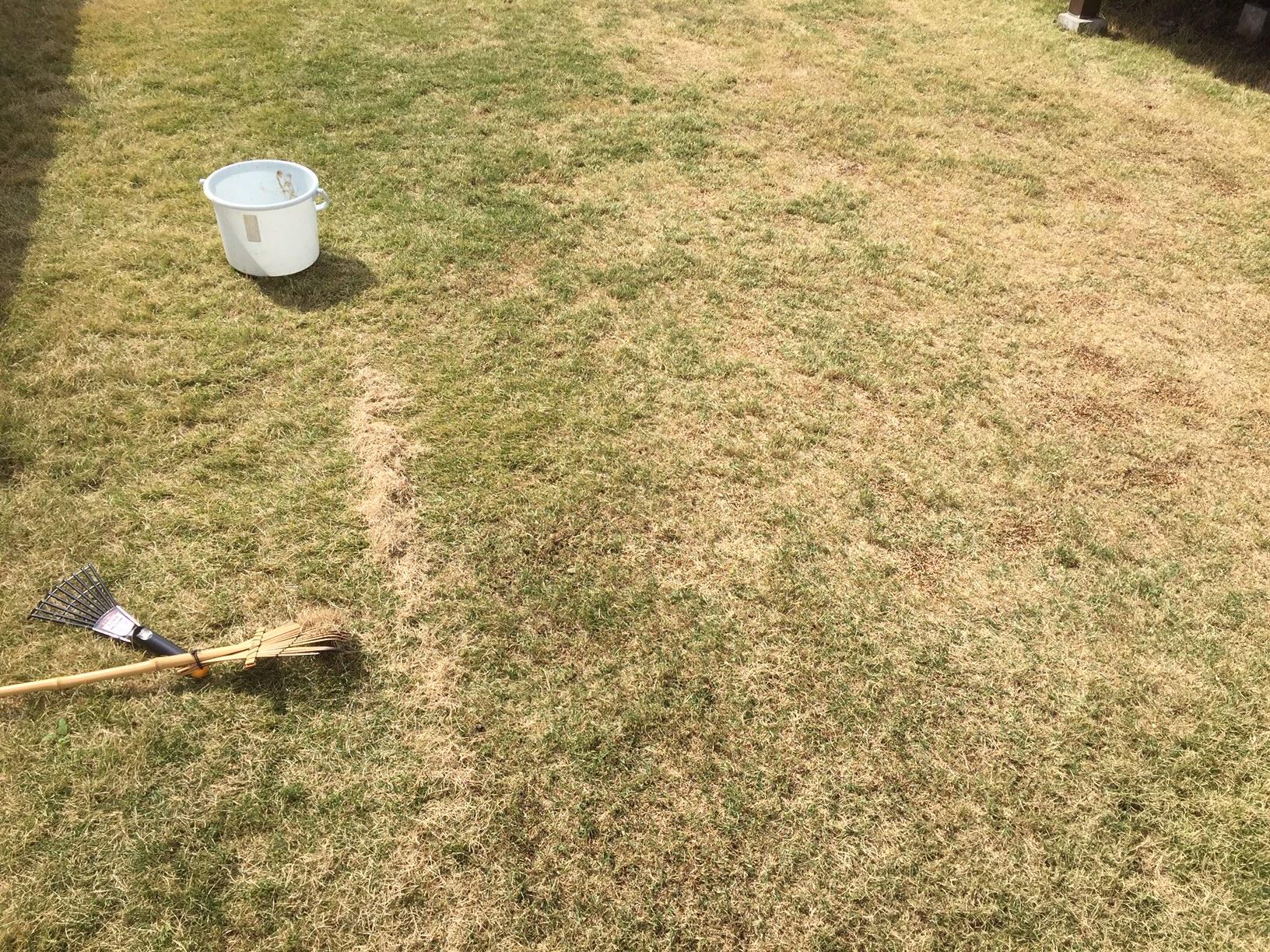 2020.05.05 芝生の状況(芝掃除)