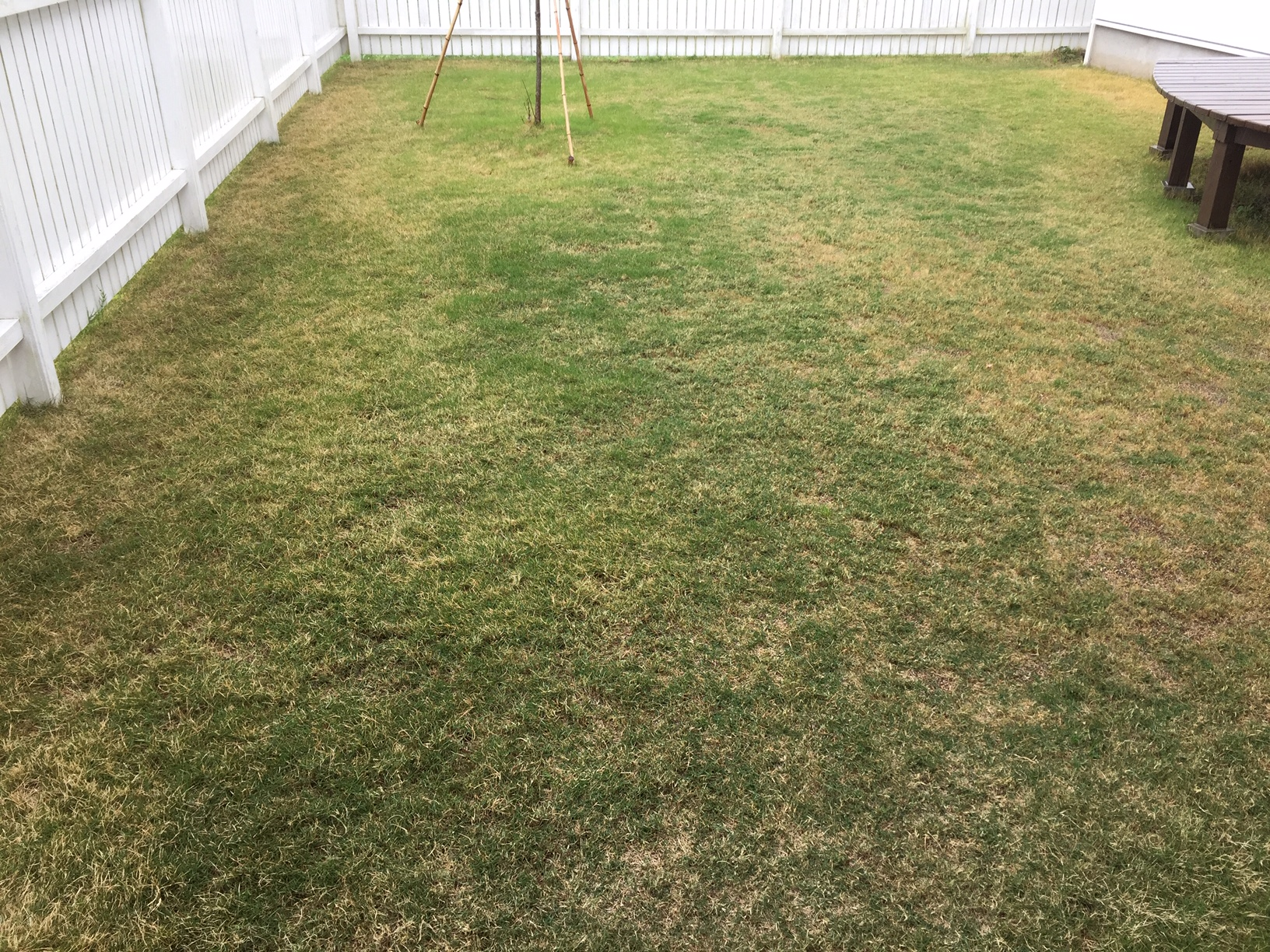 2020.05.16 芝生の状況(施肥)
