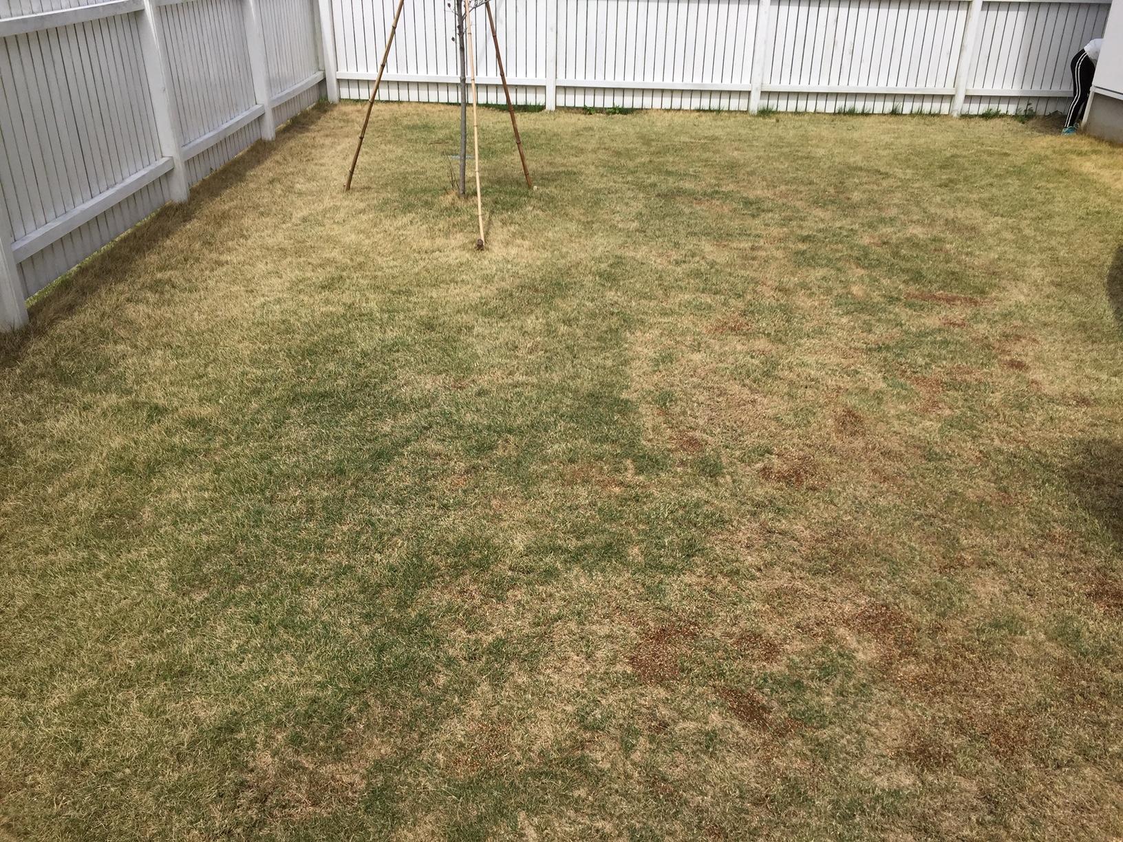 2020.05.04 芝生の状況(雑草除)