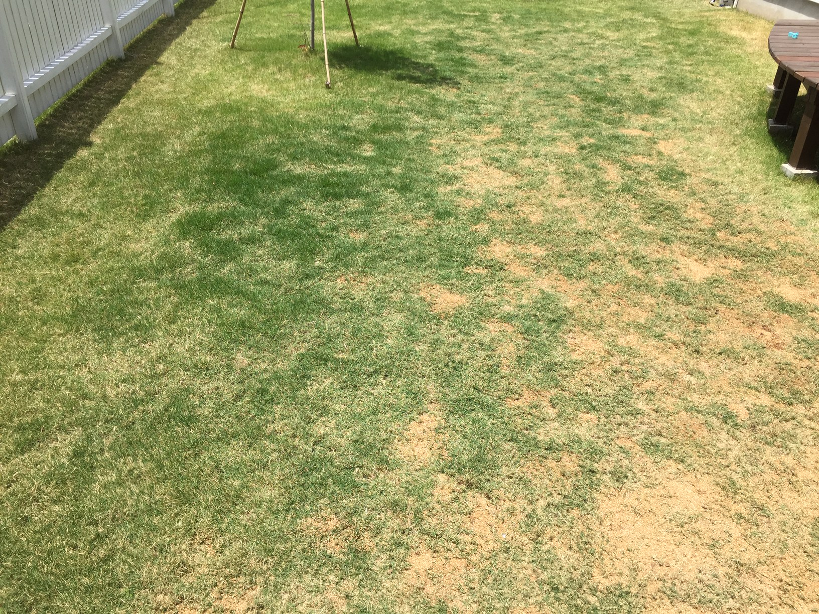2020.05.23 芝生の状況(雑草除去・エアレーション・目土)
