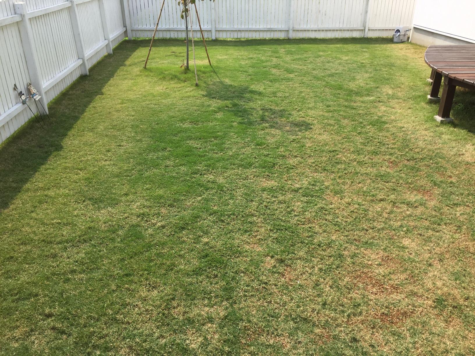 2020.05.27 芝生の状況(芝刈り他)