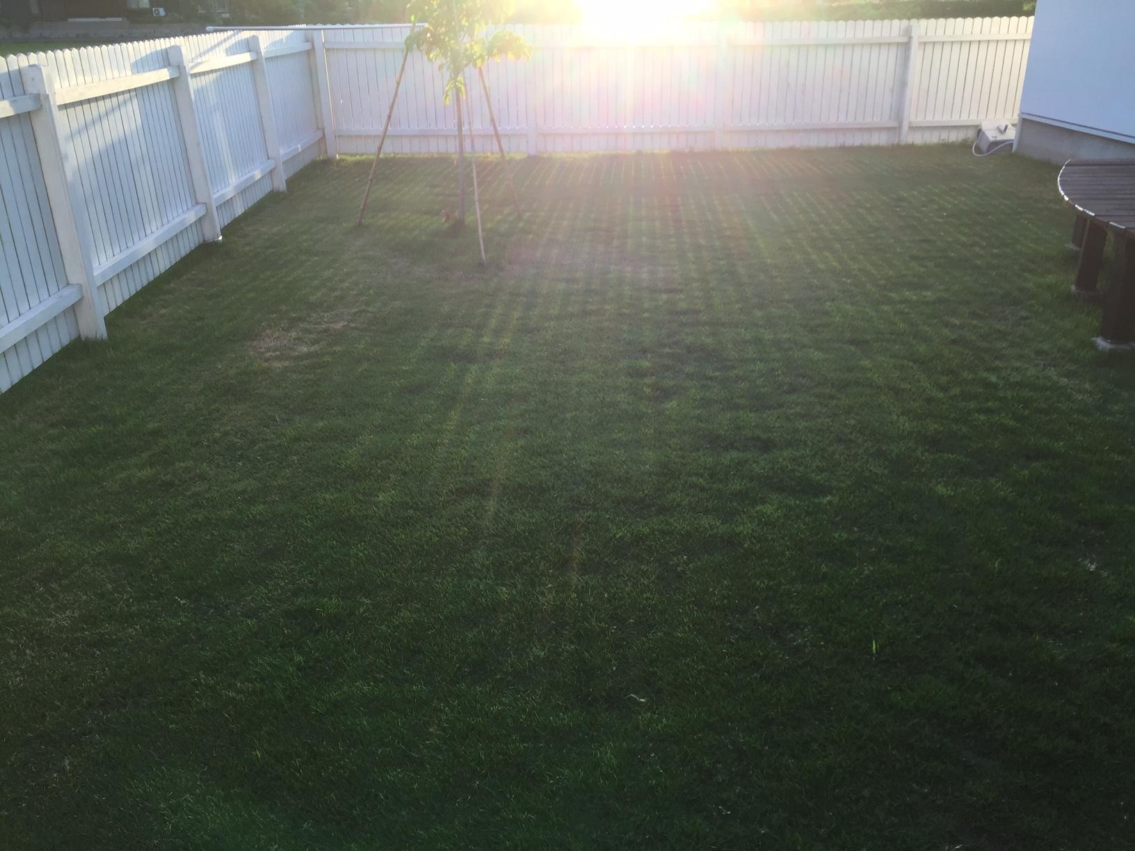 2020.06.17 芝生の状況(芝刈り)