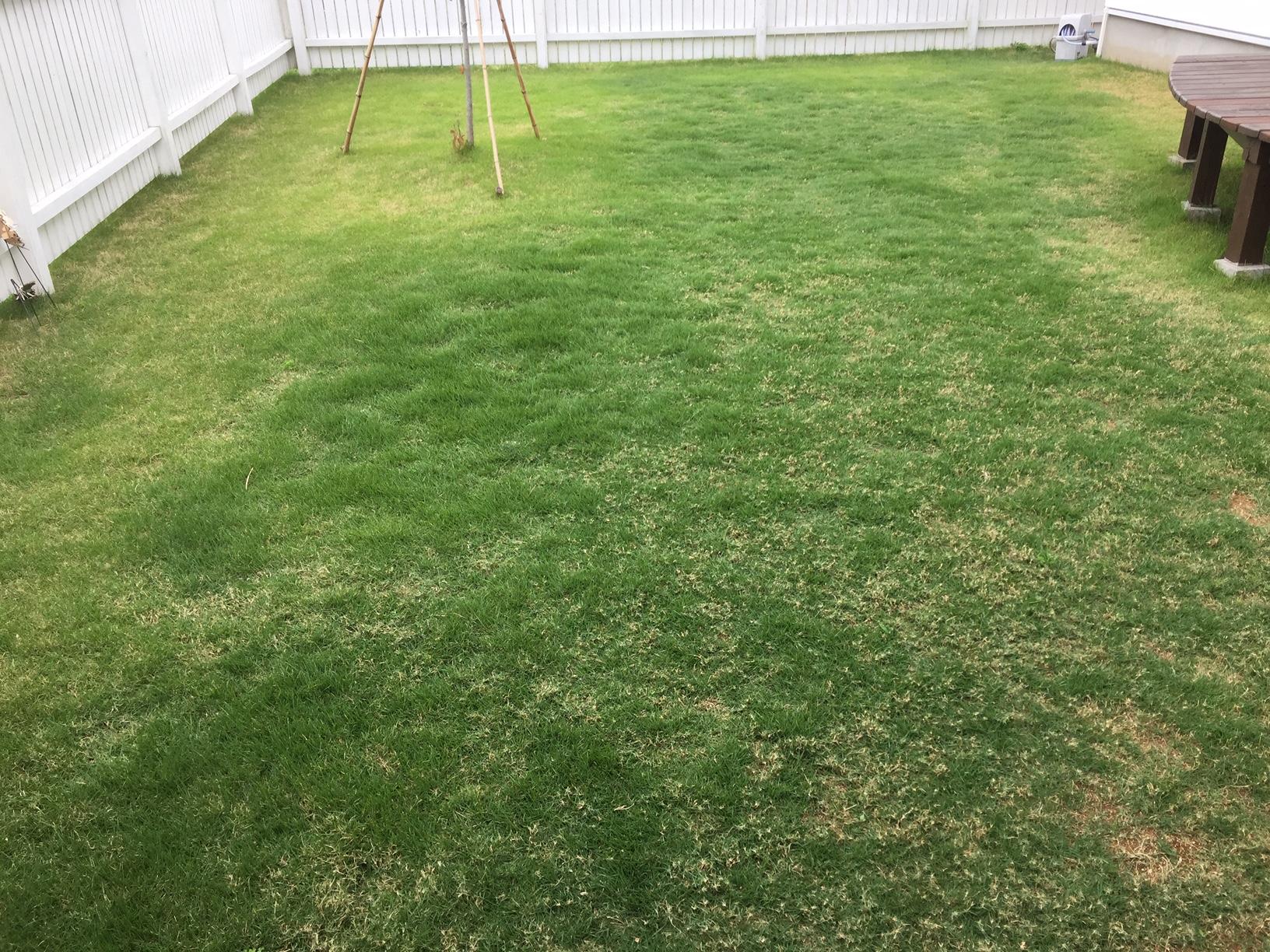 2020.06.06 芝生の状況(芝刈り)