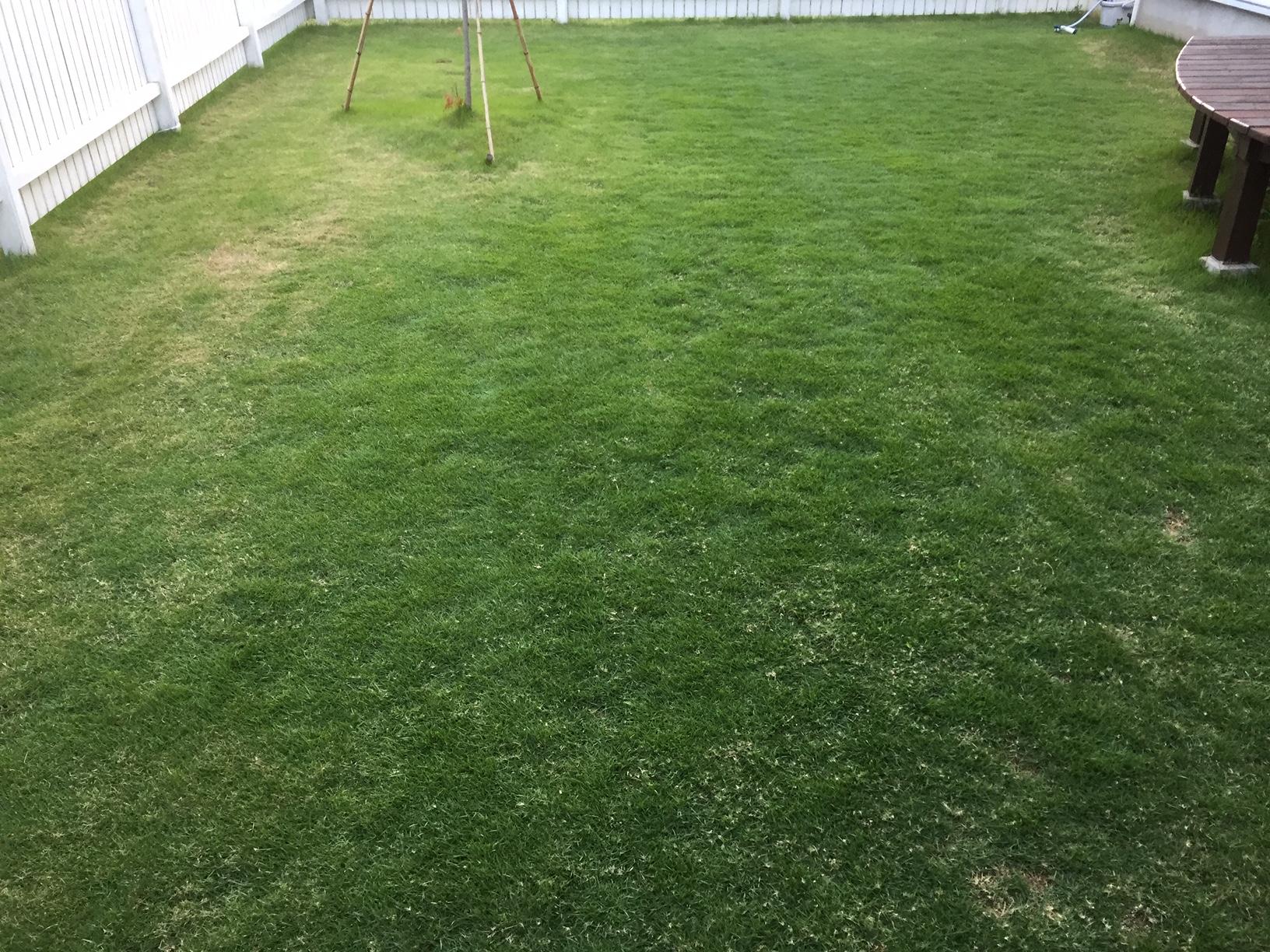 2020.06.15 芝生の状況(芝刈り)