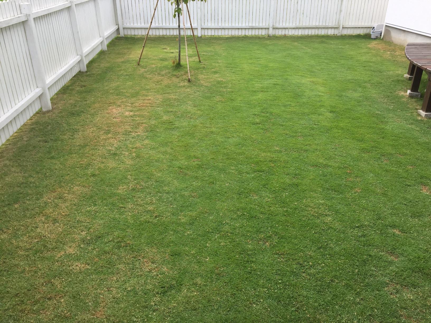 2020.06.22 芝生の状況(芝刈り&目土&施肥)