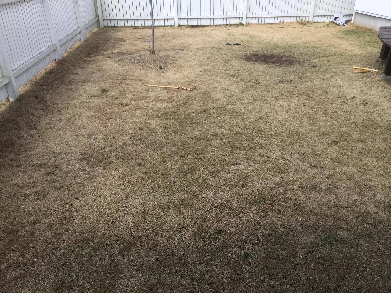 2021.03.14 芝生の状況(サッチ除去)