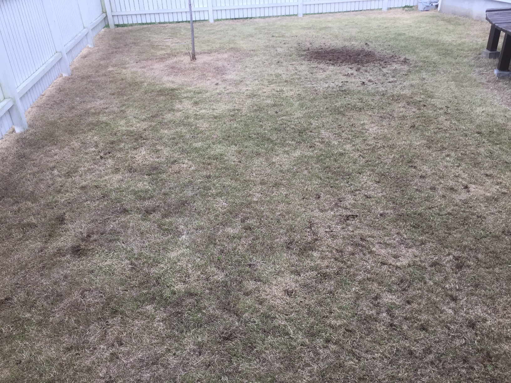 2021.03.27 芝生の状況(サッチ除去・ベンチレーション他)