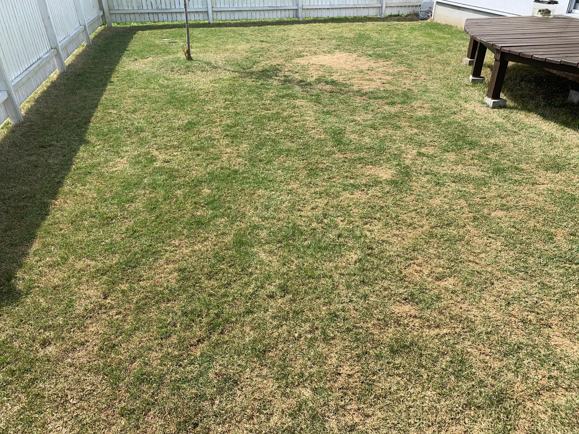 2021.04.23 芝生の状況(目土、雑草除去)