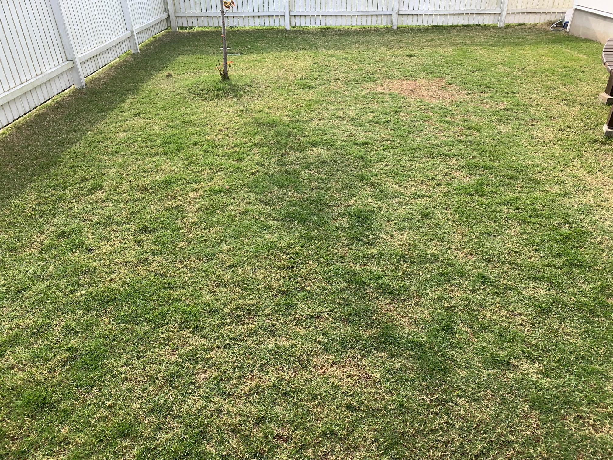 2021.05.03 芝生の状況(雑草除去・黒い虫?)