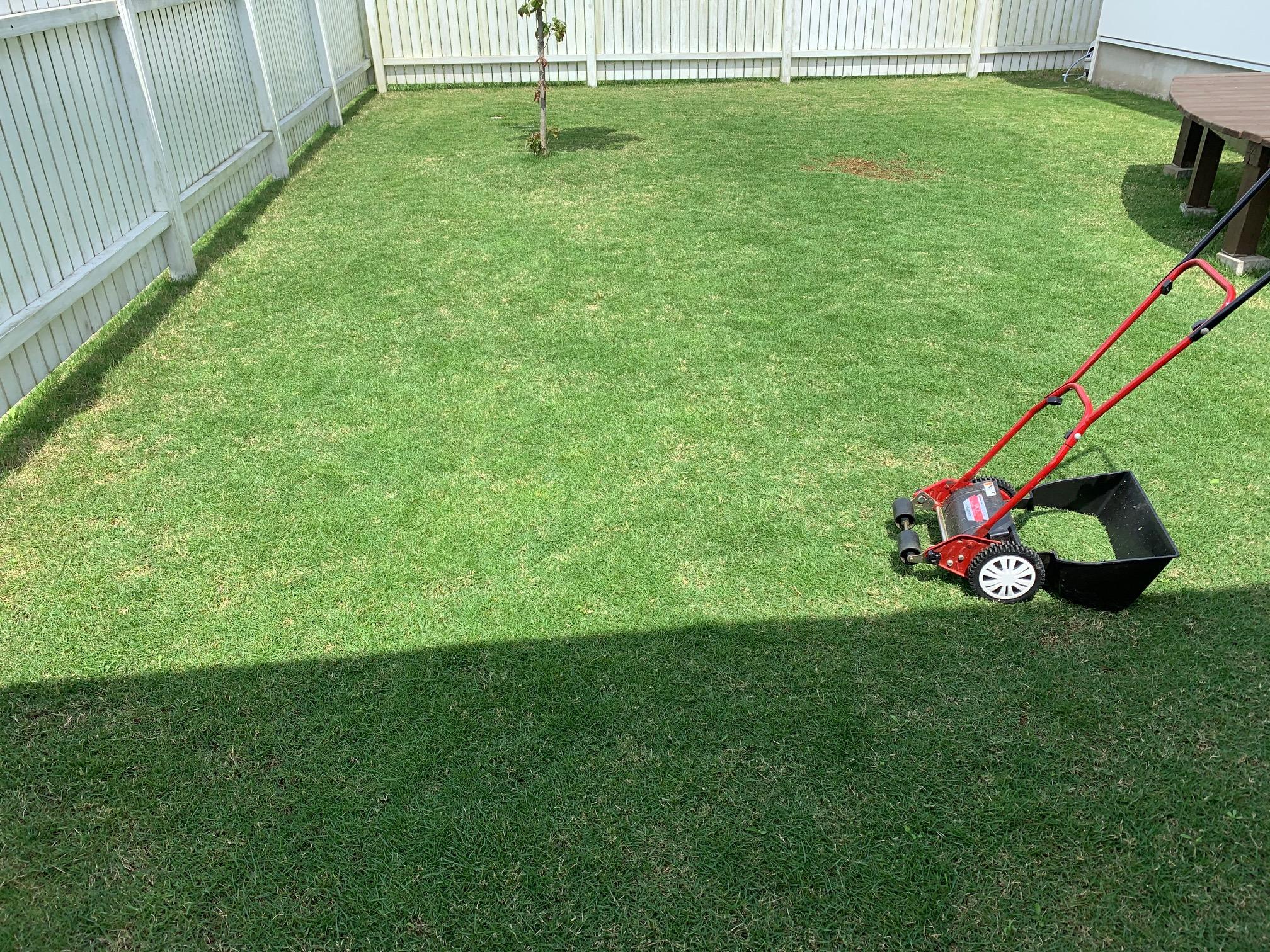 2021.05.22 芝生の状況(今年初芝刈り)