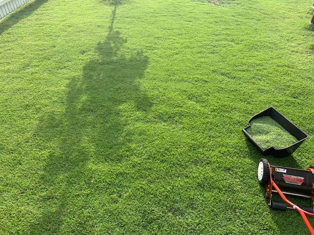 2021.06.14 芝生の状況(芝刈り)